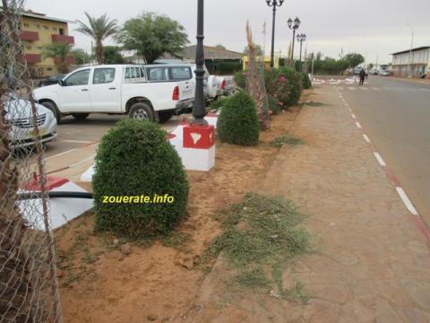 تصفيف الأشجار على الطريق الرئيسي في ازويرات